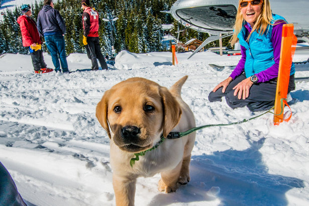Crystal Mountain, Washington avalanche puppy in training. - ©Andrew Longstreth