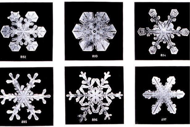 Skiinfo erklärt: Wie entsteht Schnee und warum schneit es eigentlich?Wilson Bentley