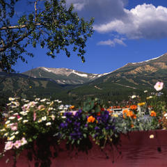 Flowers provide a splash of color during the summertime in Summit County. Photo by Leisa Gibson - © Leisa Gibson